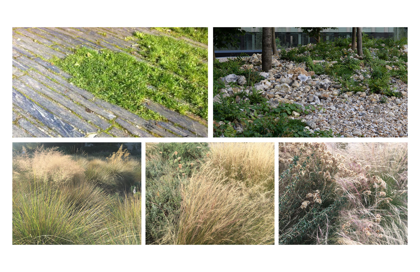 TINA CHEE landscape studio-ref images 1.jpg