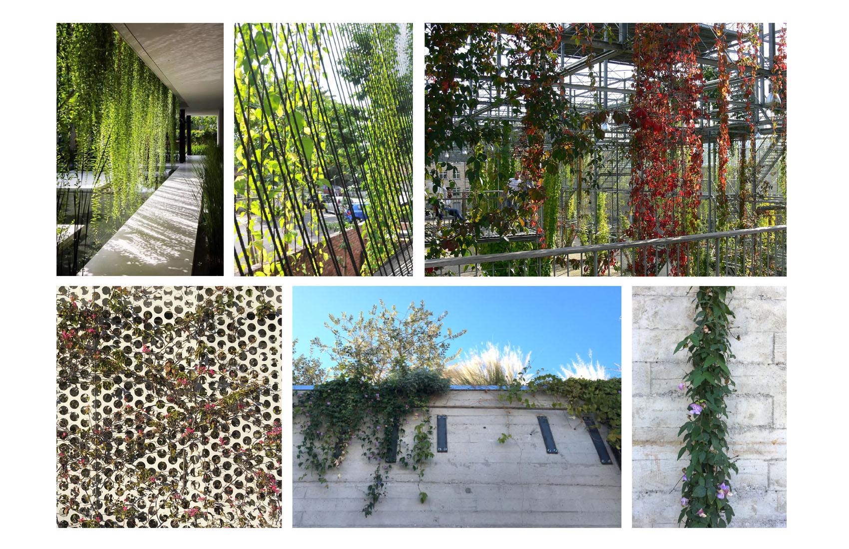 TINA CHEE landscape studio-ref images 2.jpg