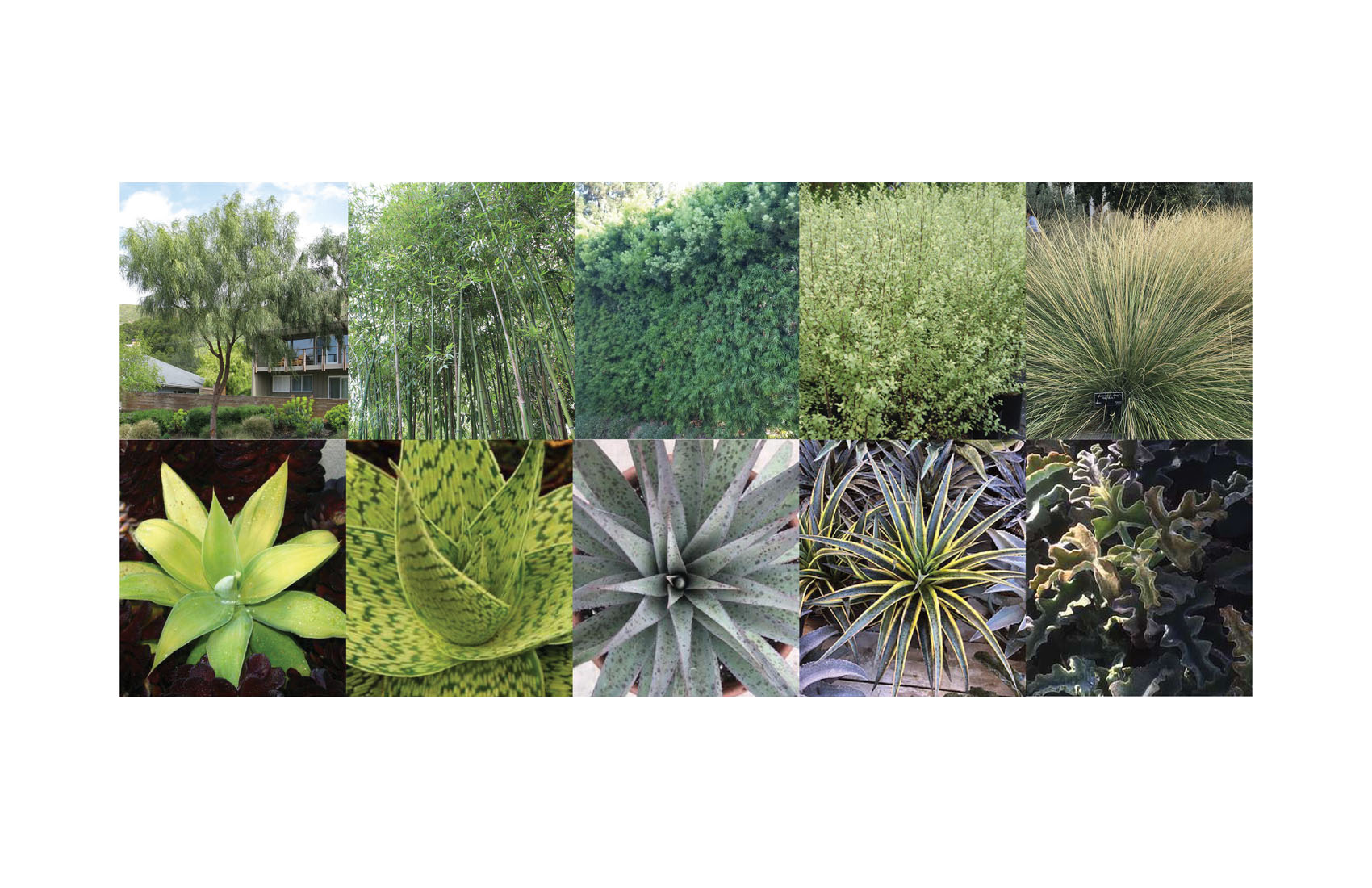 TINA CHEE landscape studio-OVERLAND-plant palette.jpg
