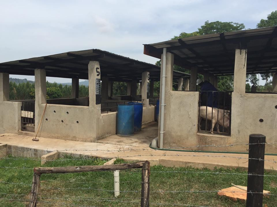 Built 20 bio-toilets and 3 combination stoves. Waste is recycled and used as fuel for the stoves where meals are made.