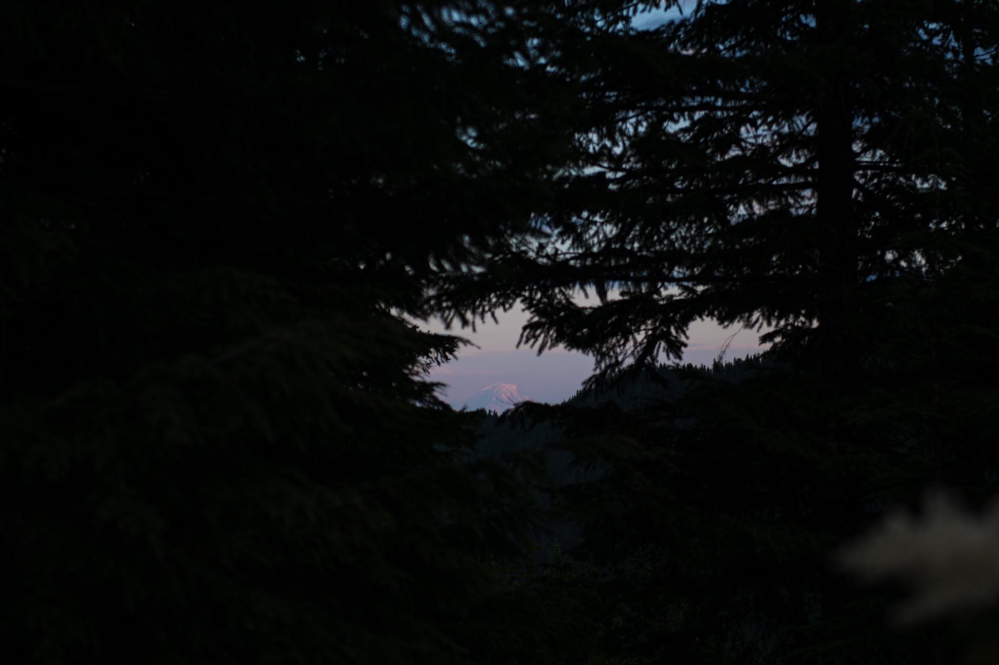 Mountain view through the trees