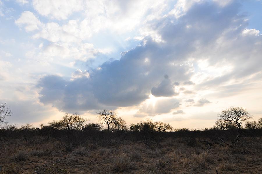 SAfrica_004.jpg