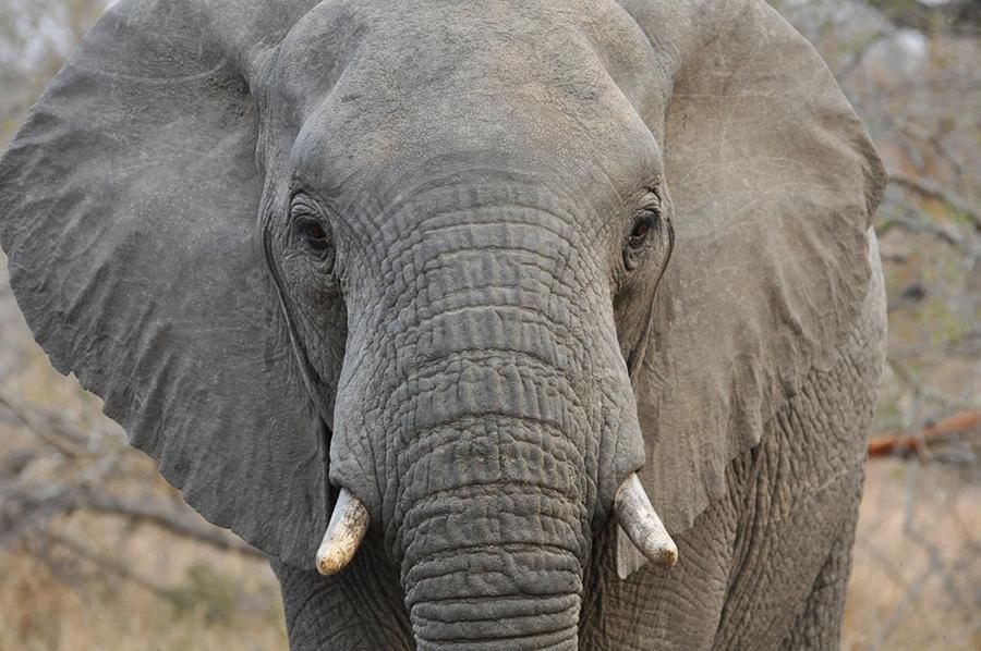 SAfrica_013.jpg