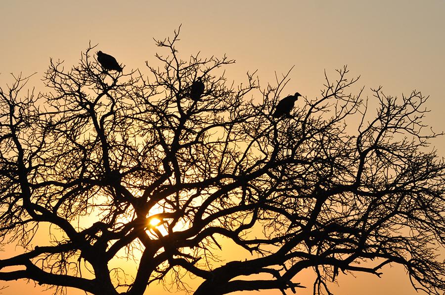 SAfrica_019.jpg