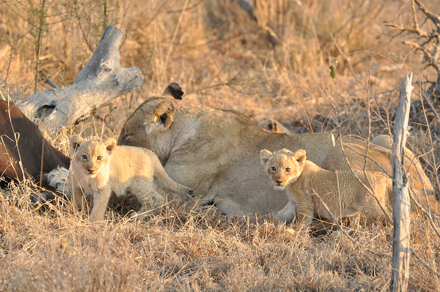 SAfrica_021.jpg