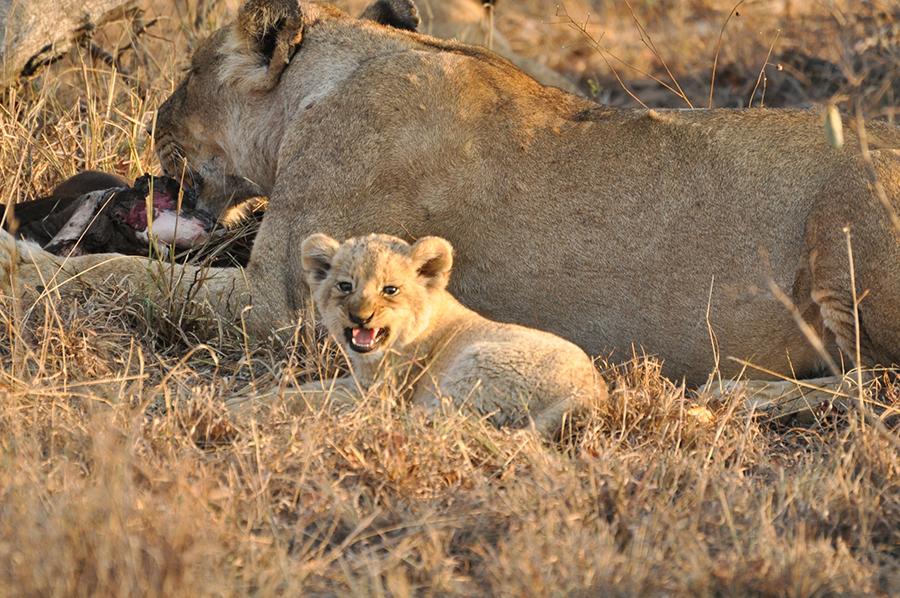 SAfrica_022.jpg