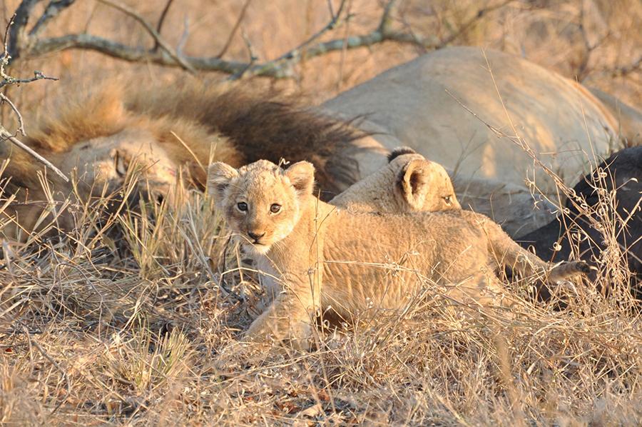 SAfrica_023.jpg