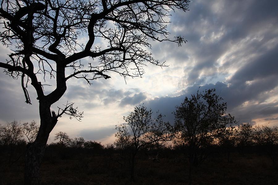 SAfrica_033.jpg