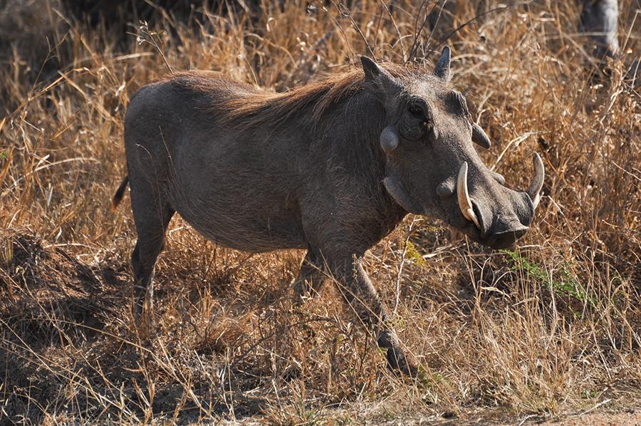 SAfrica_045.jpg