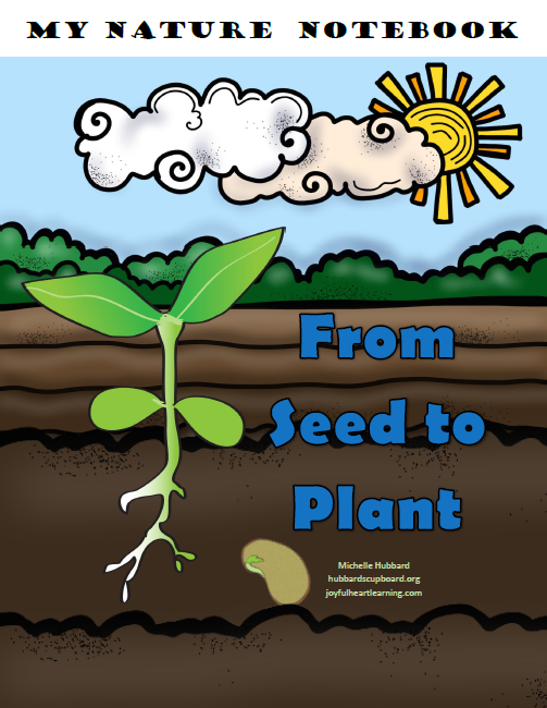 From Seed To Plant Cover.png