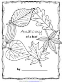 Anatomy of a Leaf.png