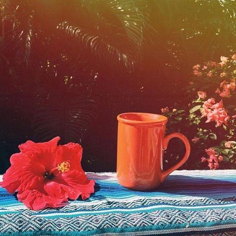 Hey Kauai Friends, We will be in Kauai's Culinary Market at The Shops at Kukui' ula in Poipu this evening!  Come down enjoy a cup of superfood tea + shop our blends, ask questions + chat about herbal health! _______________________________________________#Naikelabotanical #superfoodtea #tea #tealatte #herbaltea  #naturalmedicine #herbs #wellness #health #hawaii #kauai #oahu #maui #bigisland #ilovetea #teatime #ayurvedicmedicine #chineseherbalism #longevity #holistichealth #calm #stress #stressed #alkaline #healyourself #foodismedicine #superfood #hippy #boho  #betheadventure