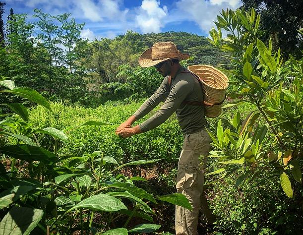 Aaron harvesting.jpg
