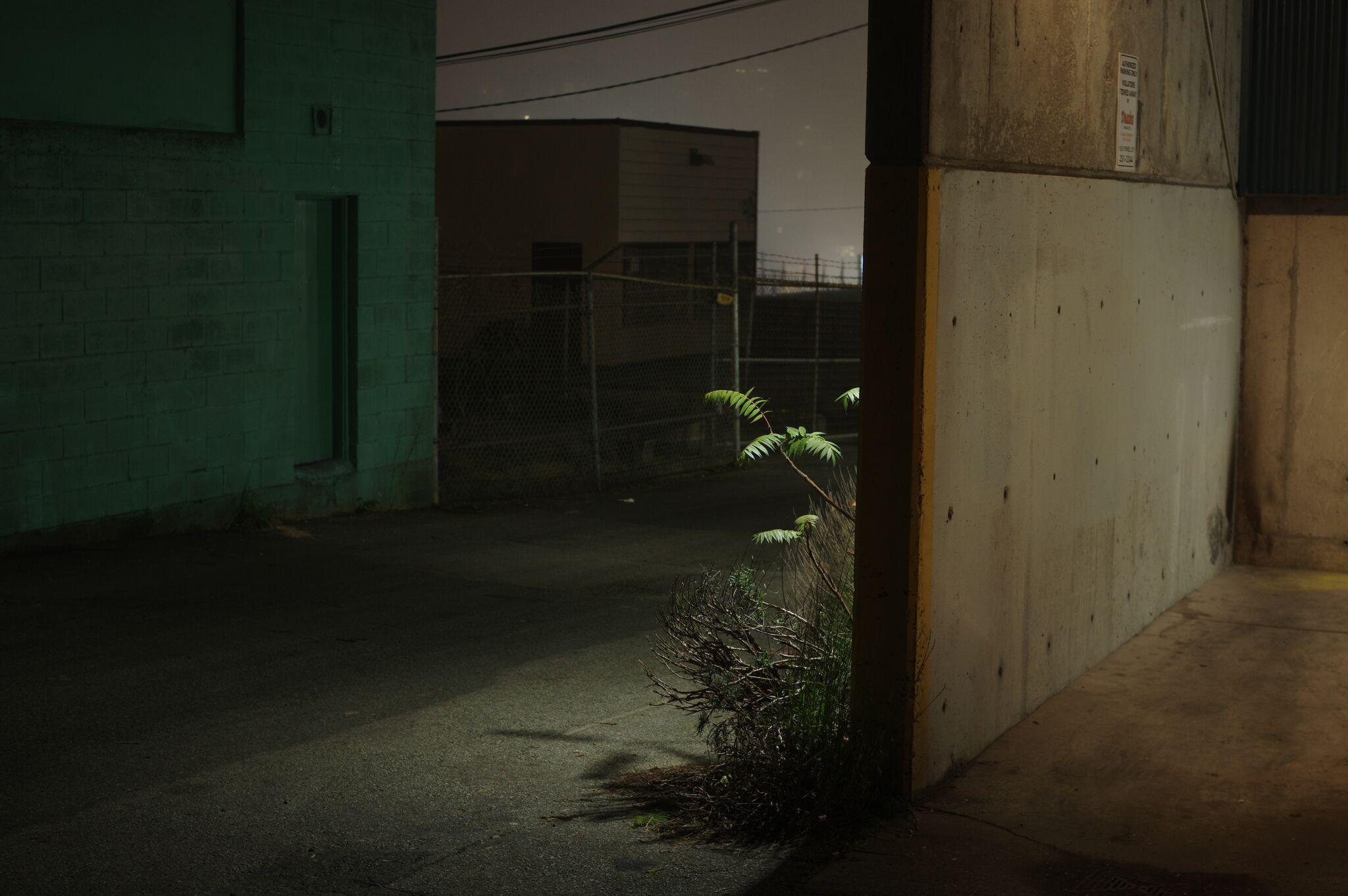 Alley Plant, 2018. Technique: Digital long exposure.