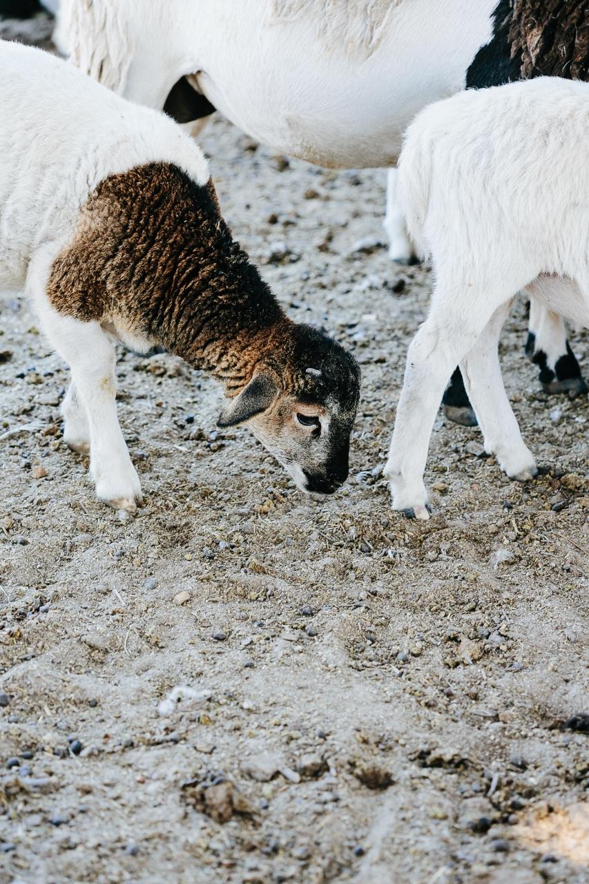 Womach Ranch Vy Tran (34 of 42) (853x1280).jpg