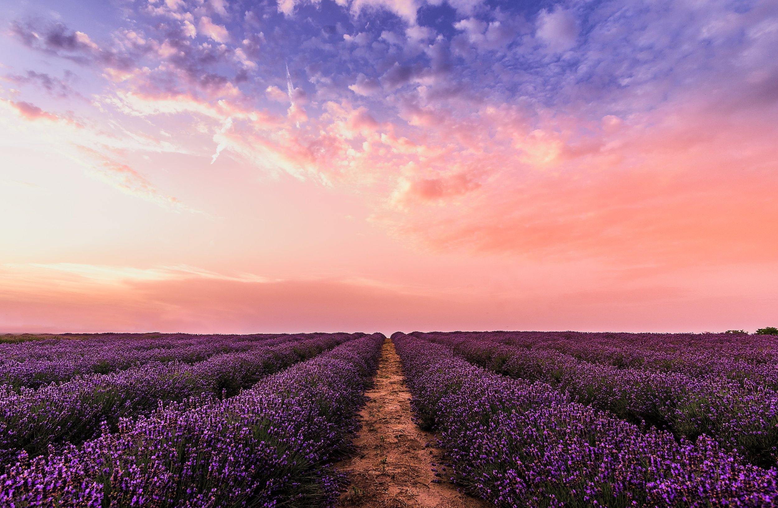 abundance-agriculture-countryside-1166209.jpg