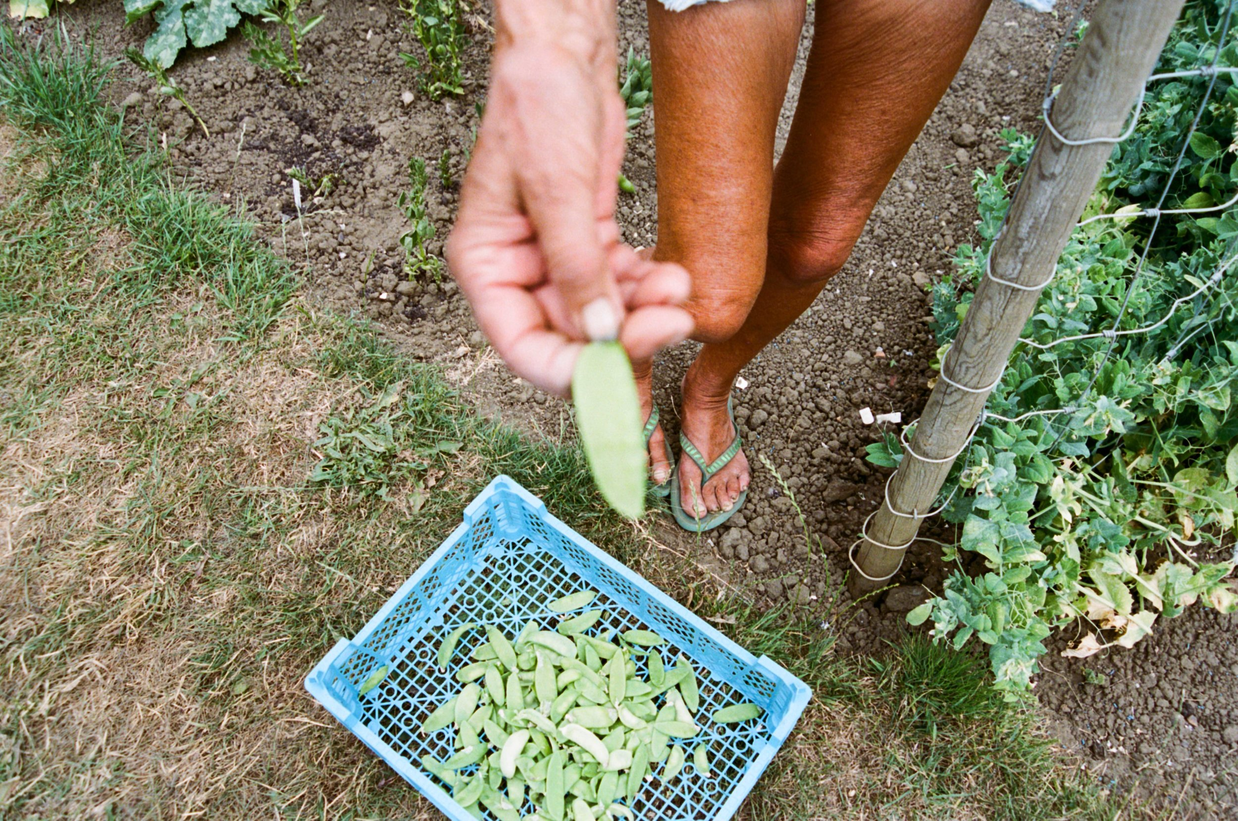 allotments (13 of 56).jpg