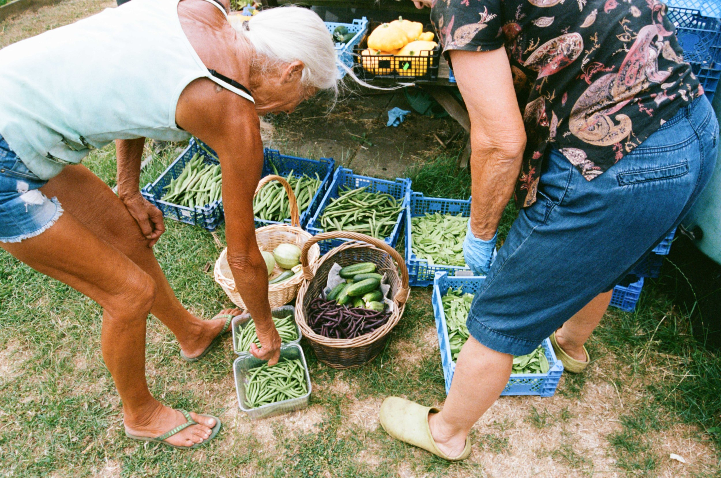 allotments (10 of 56).jpg
