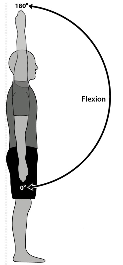 shoulder flexion.jpg