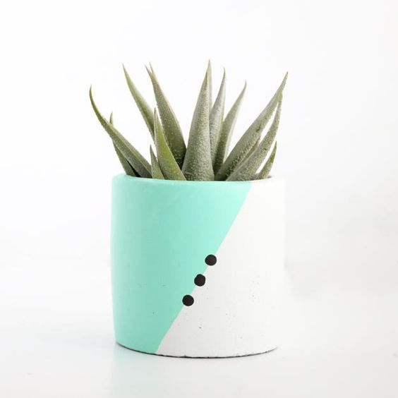 - You can also incorporate color by finding or painting a simple but unique pot for your plant.
