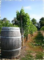 elk-run-winery-and-usda-grant-recipient