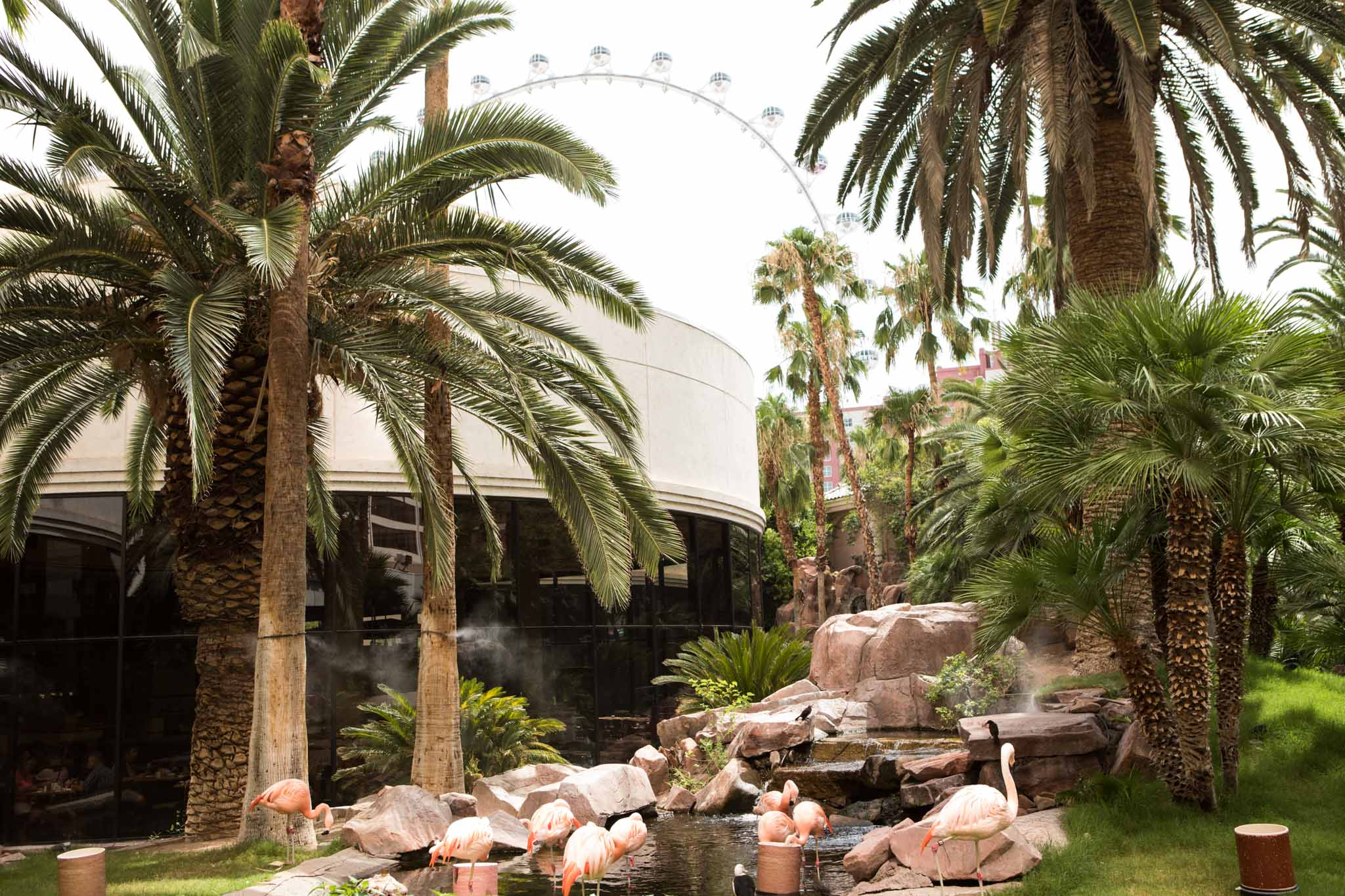 live flamingos and palm trees at the Flamingo in Las Vegas.jpg