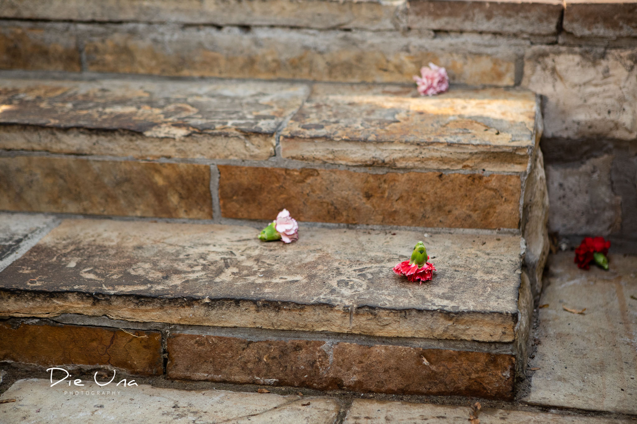 celebration flowers on the stairs thrown during wedding ceremony.jpg