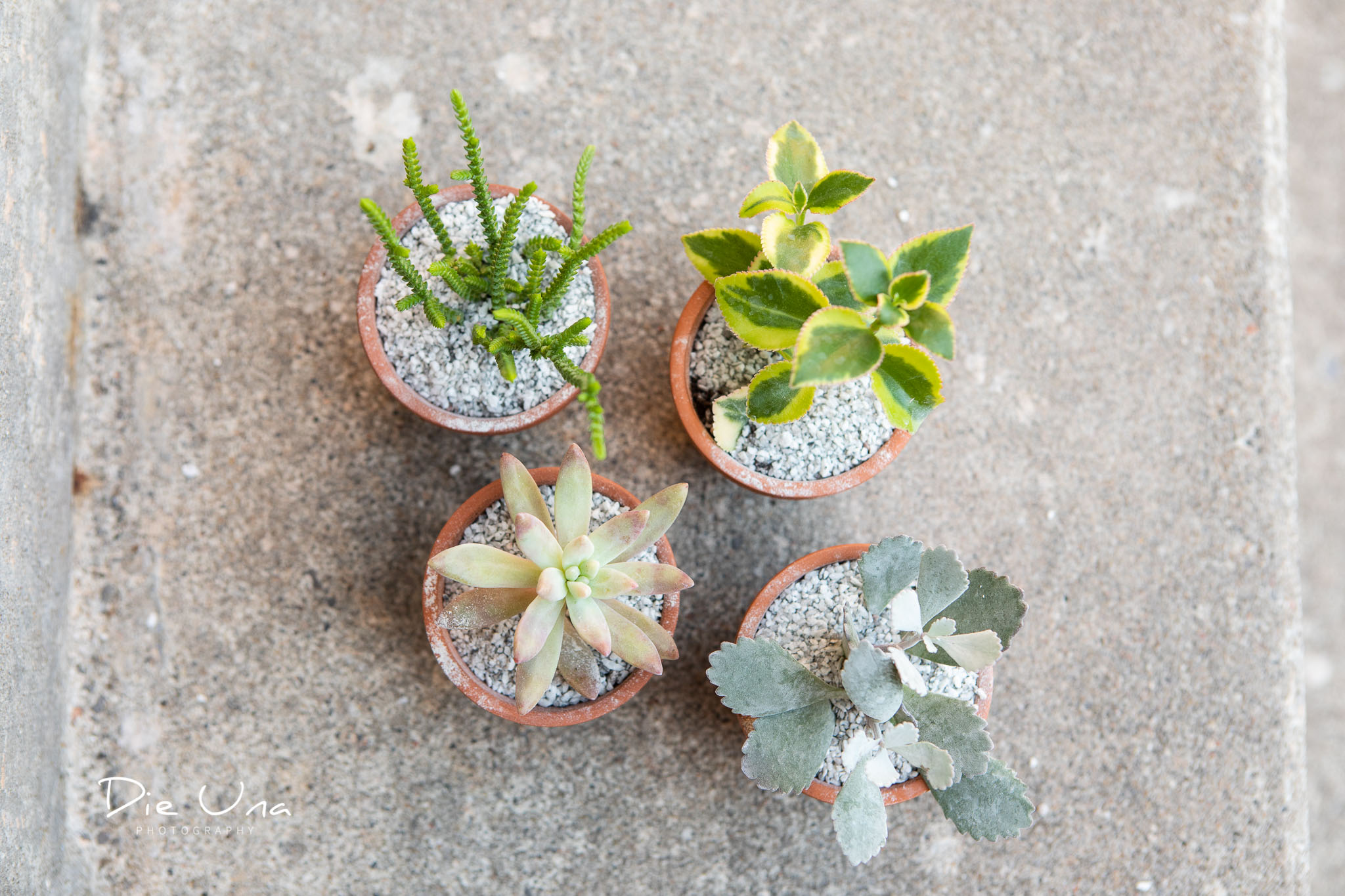 tiny potted succulents as wedding favors.jpg