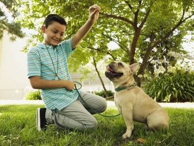 """This is an image of a young boy rewarding his dog with a treat for using """"the zone"""" properly. The image illustrates how to train your dog to poop in one particular area of your yard."""