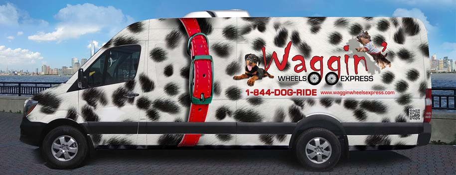Check out the Waggin' Wheels Express vehicle. It is a 2014 Mercedes Sprinter van with multiple safety features. Justyna and crew chose this vehicle because of the history and reliability of the brand behind it. If you drive luxury vehicles ... now so can your dog!   014 Mercedes Sprinter van because of multiple safety features it offers, as well as because of the history and reliability of the brand behind it. If you drive a luxury car, why can't your best bud drive in one too