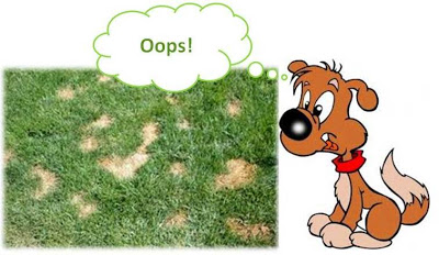 Oops!  Dog poop can destroy lawns as it breaks down very slowly over time.  Hiring a pet waste removal company can help your lawn stay healthy.
