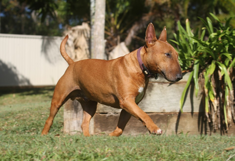 pooper scooper, dog poop, dog waste removal, pet waste removal, dog poop pick-up, poop removal, dog poop removal, dog poop services, dog poop in yard, dog in backyard, backyard safety, fence authority