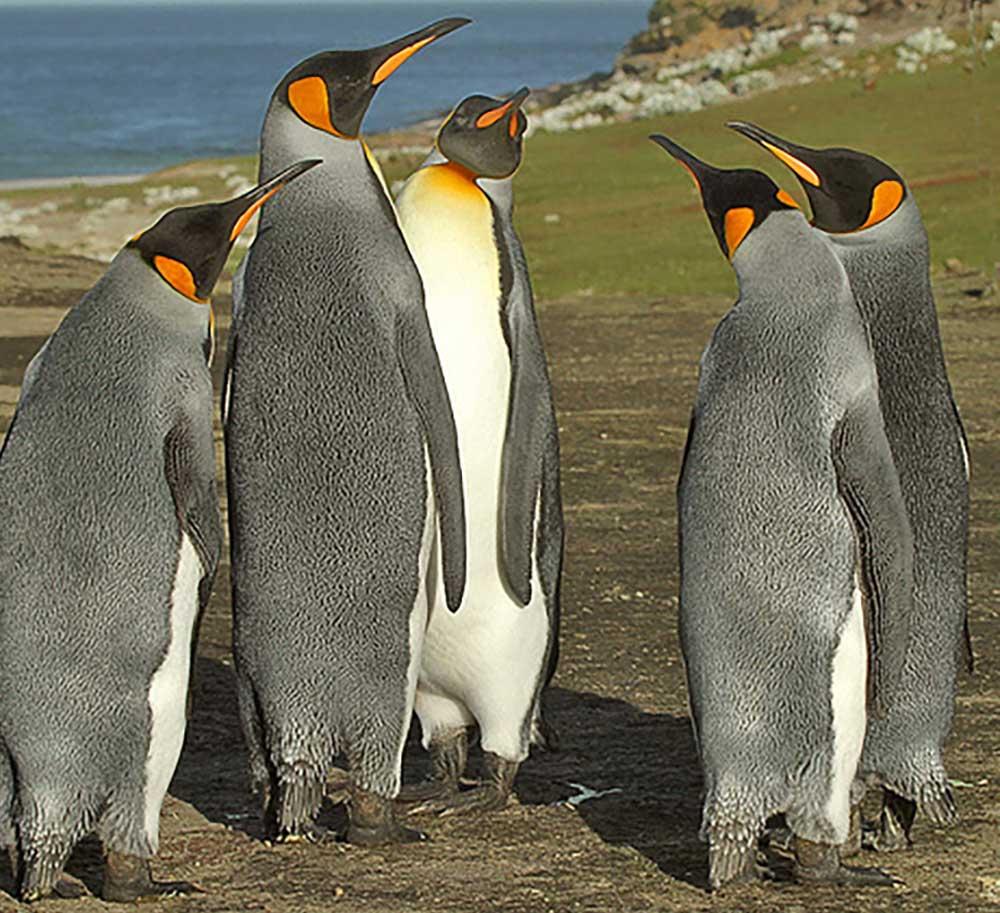 Image: Charlie Summers (Flickr)