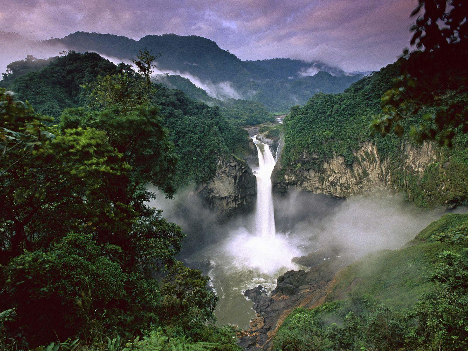 dmckesq-rainforest.jpg