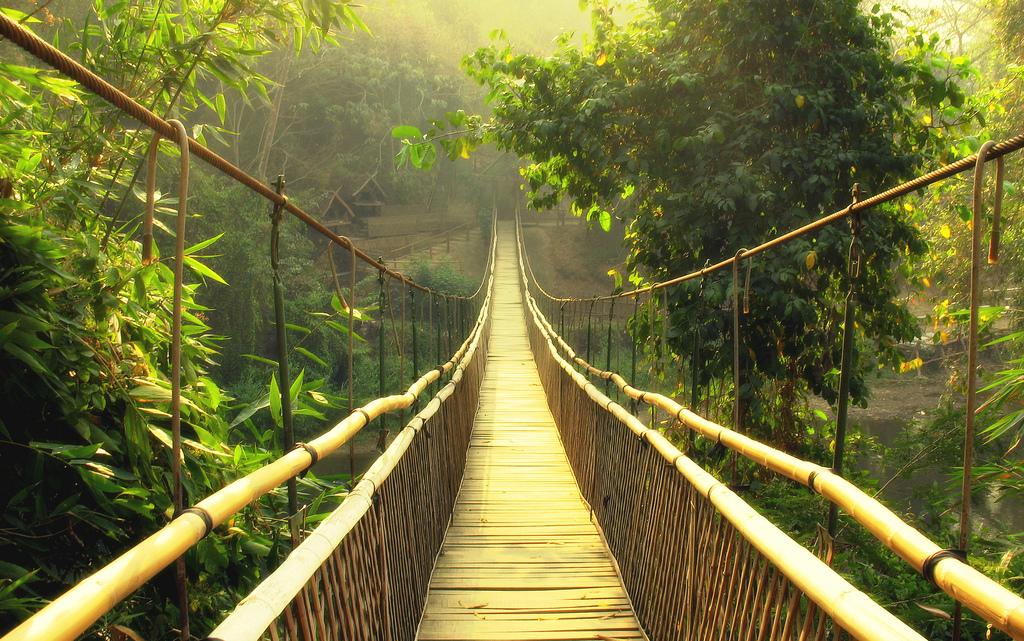 dmckesq-independent-bridge-jungle.jpg