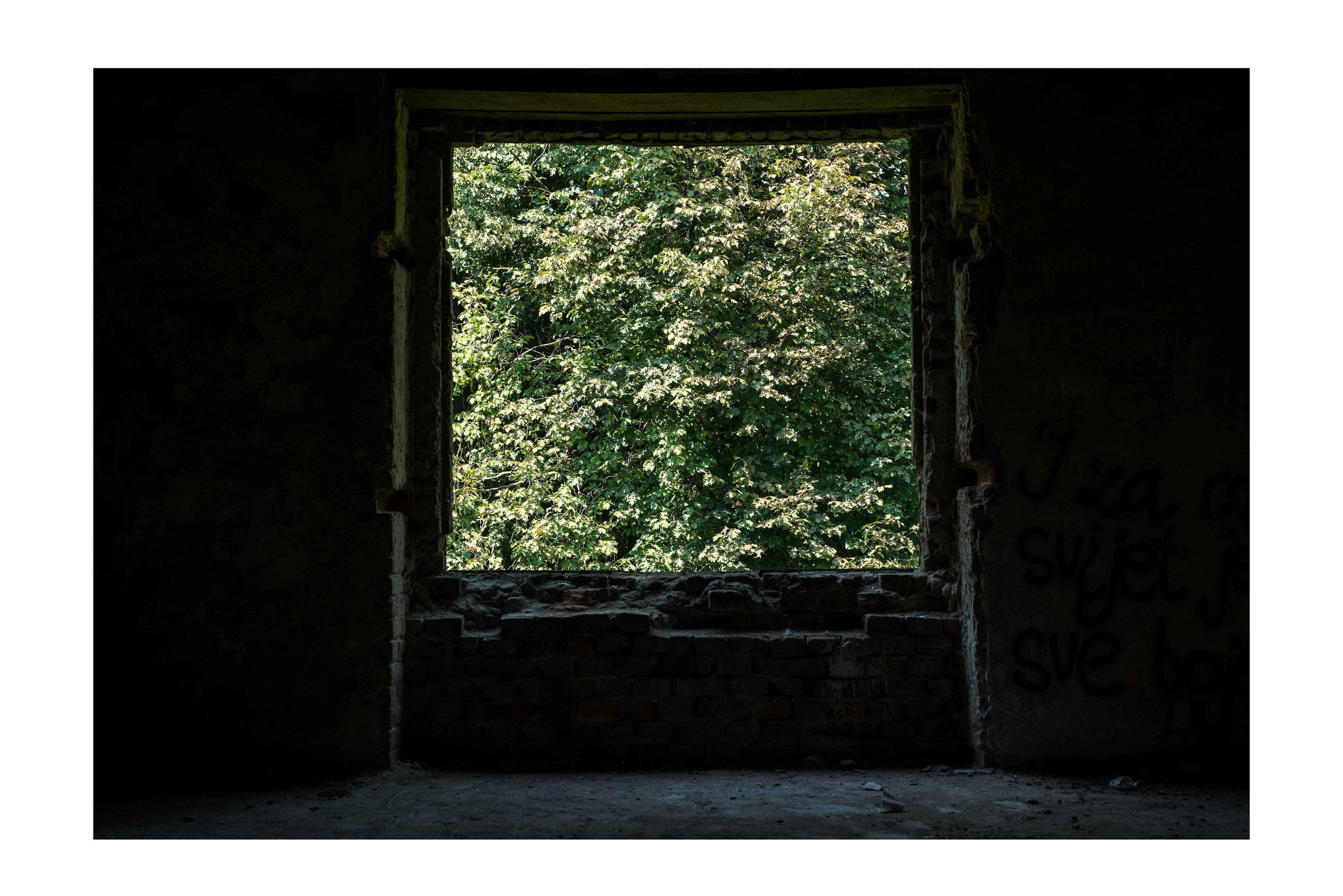 window to nature.jpg