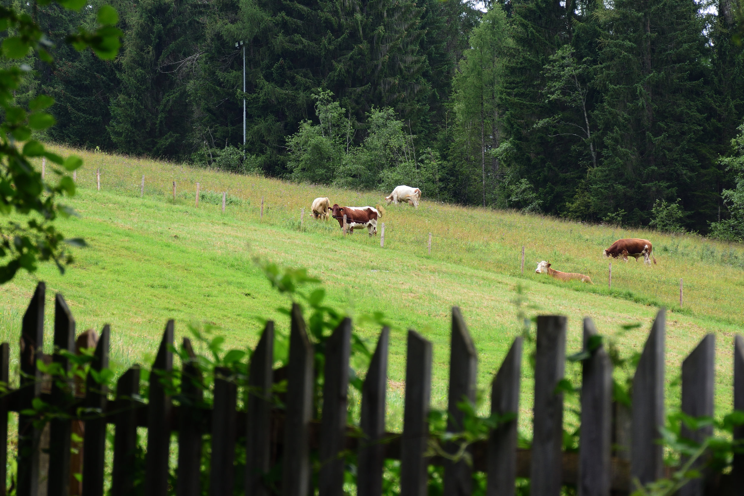 View from our kitchen window in summer