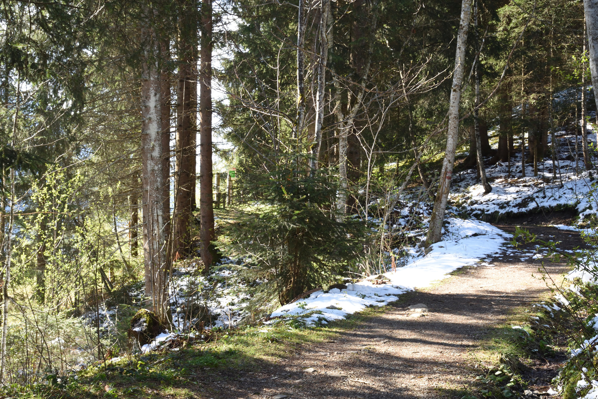 My favourite path in Flachau, 2017