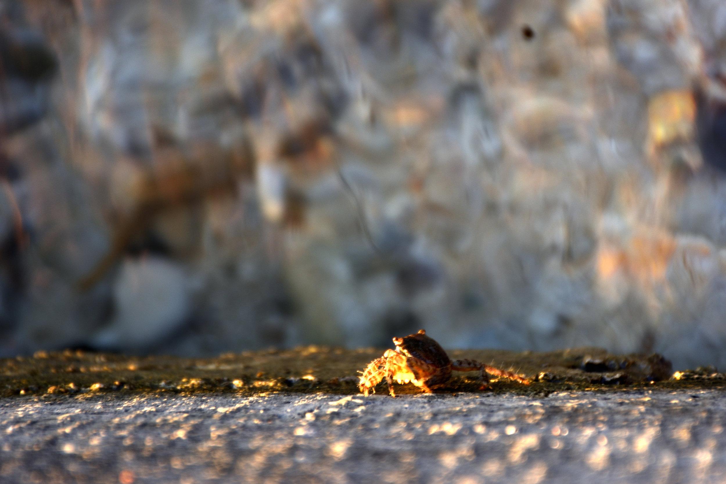A crab.