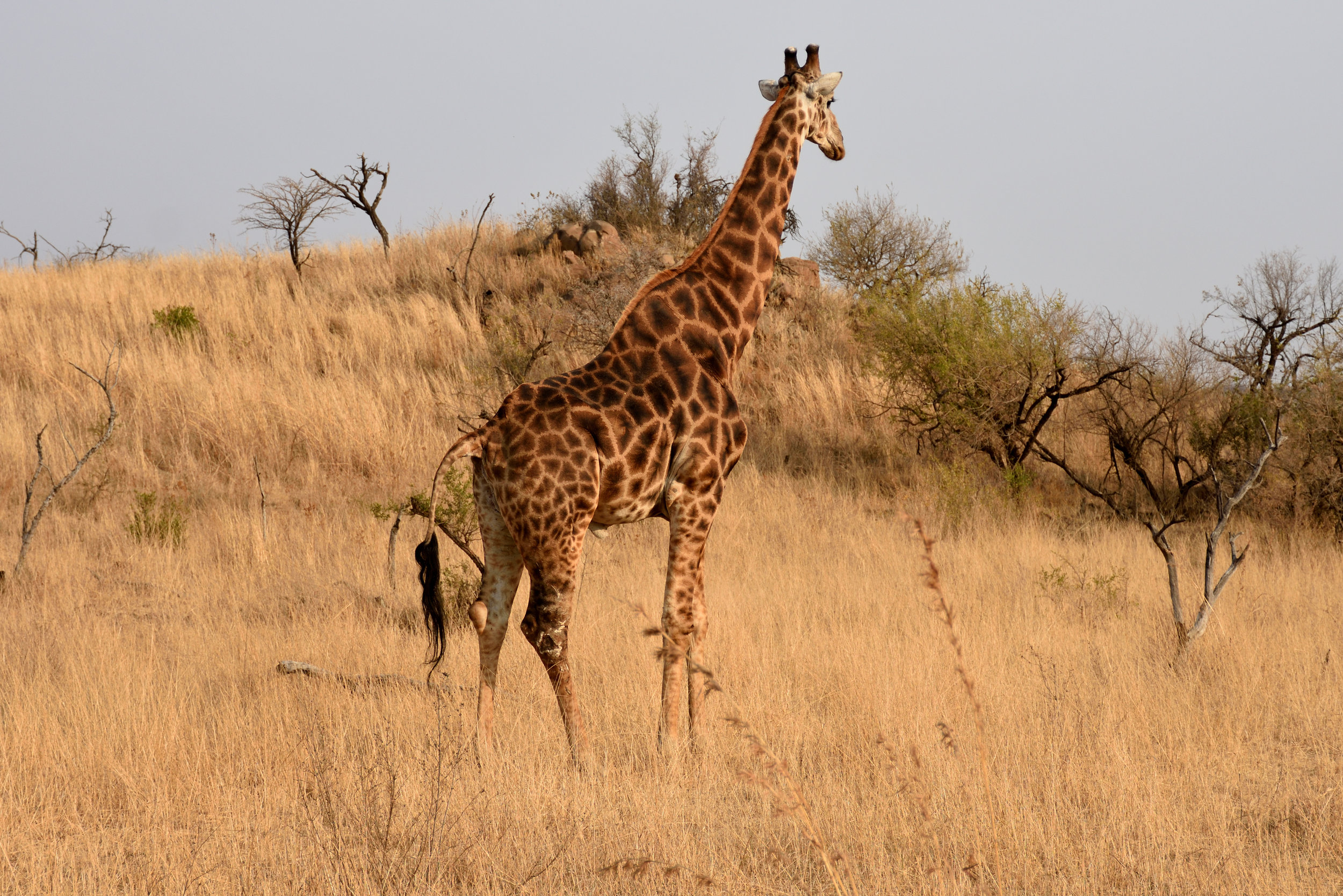 Nambiti Game Reserve, South Africa, September 2017
