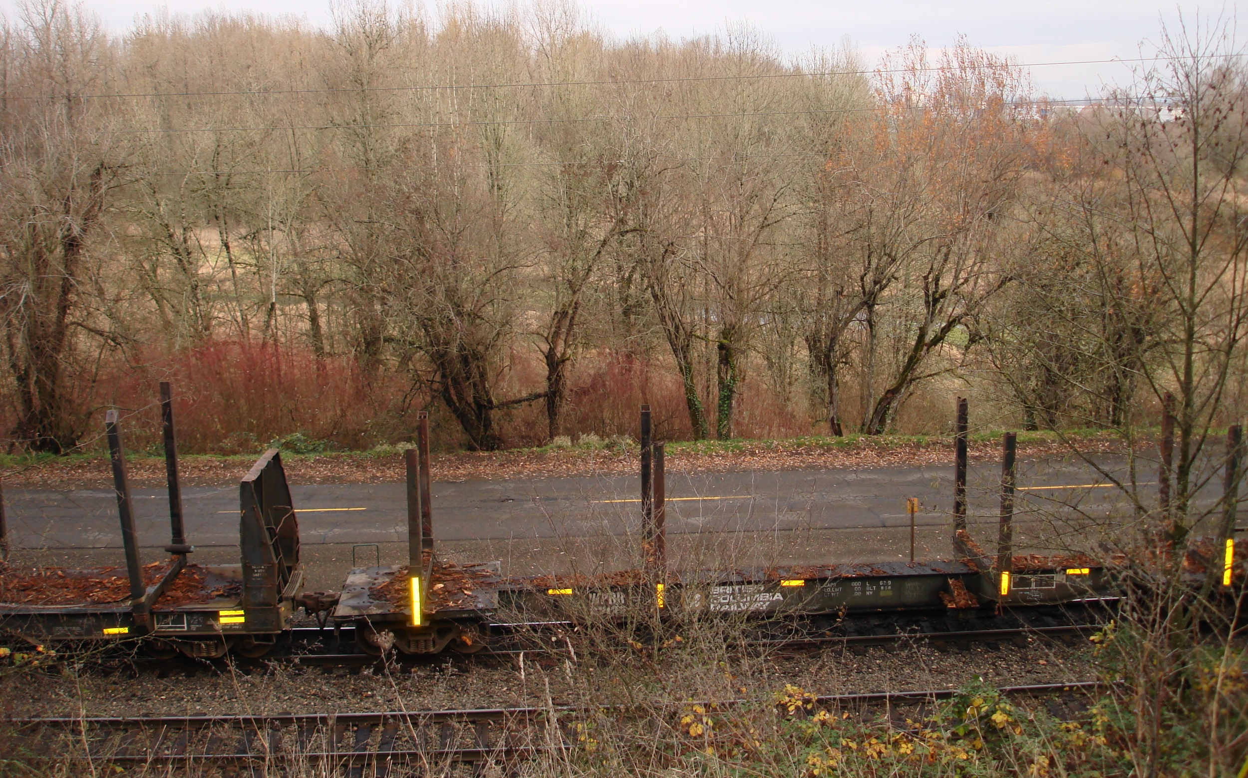 Looking from the highway, these are the railroad tracks and Marina Way, with the pond beyond the willows and red-osier dogwood.