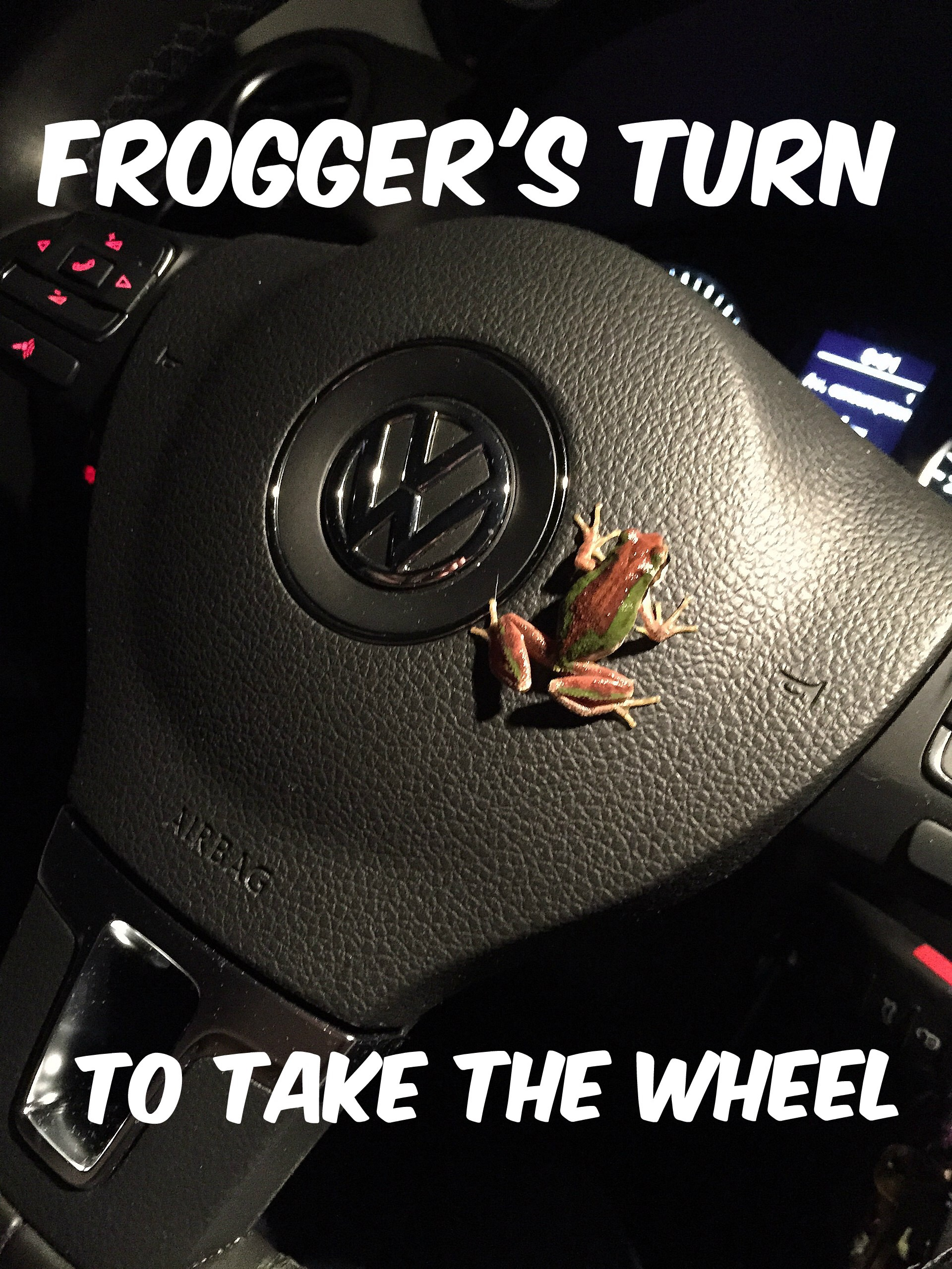 "Michelle Delepine ""caught"" this chorus frog in action, complete with the racing stripe we've been seeing lately."