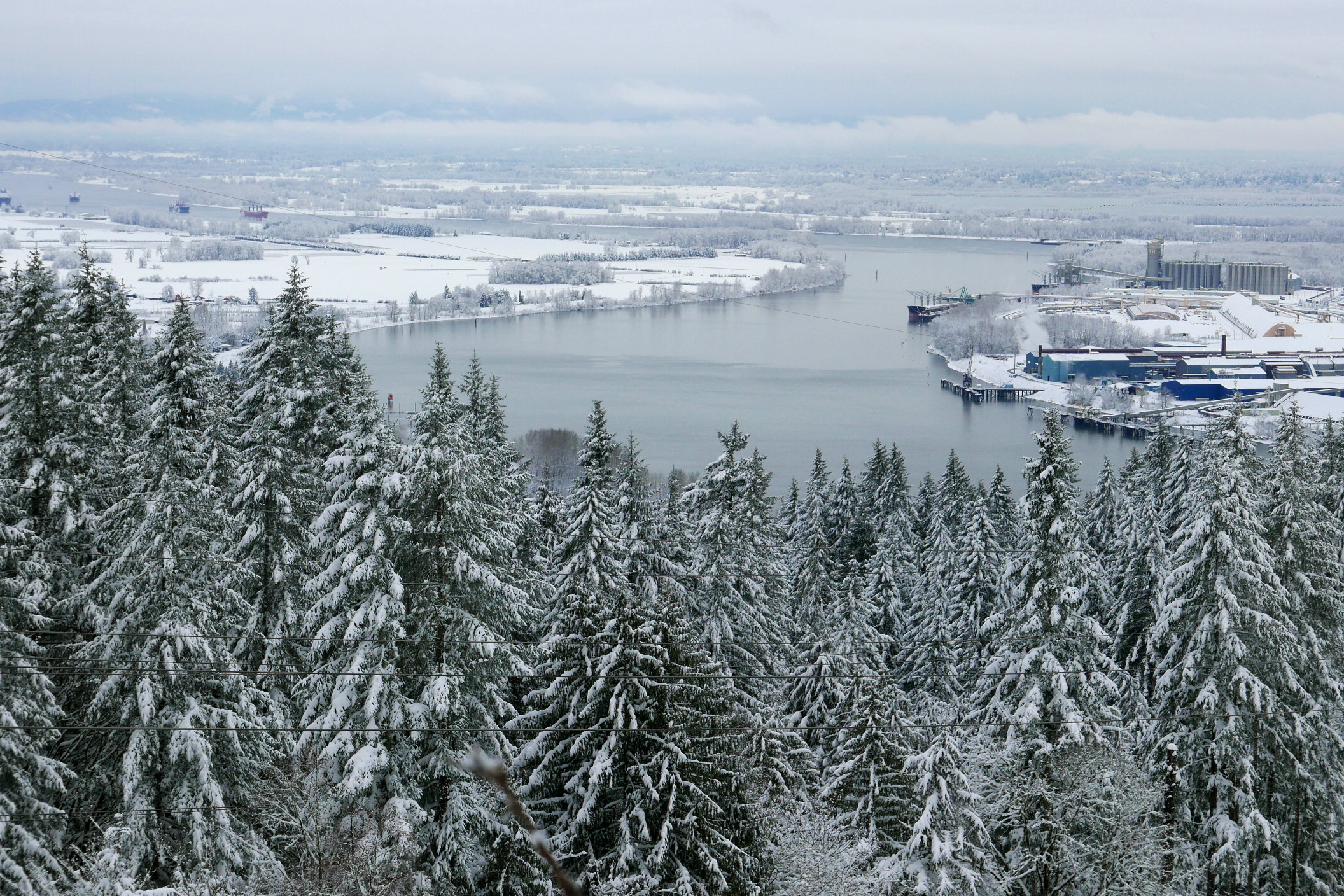 The forest where the frogs live, and the Willamette River's confluence with the Columbia, an industrial area on the right, Sauvie Island on the left, and Washington State in the distance.