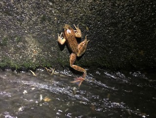 Frog climbs the curb. photo by Stuart White