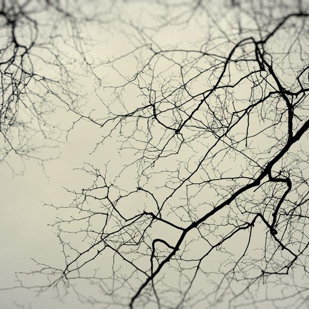 whispers_XII.jpg