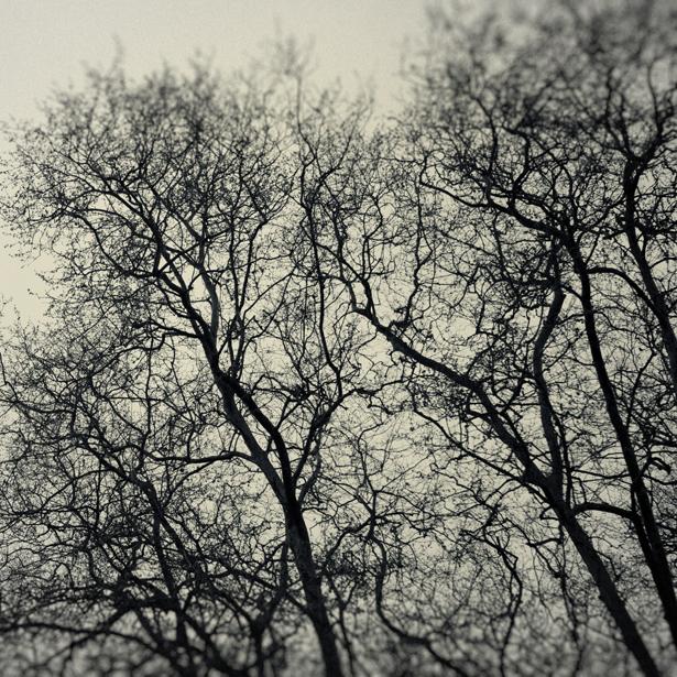 whispers_XI.jpg