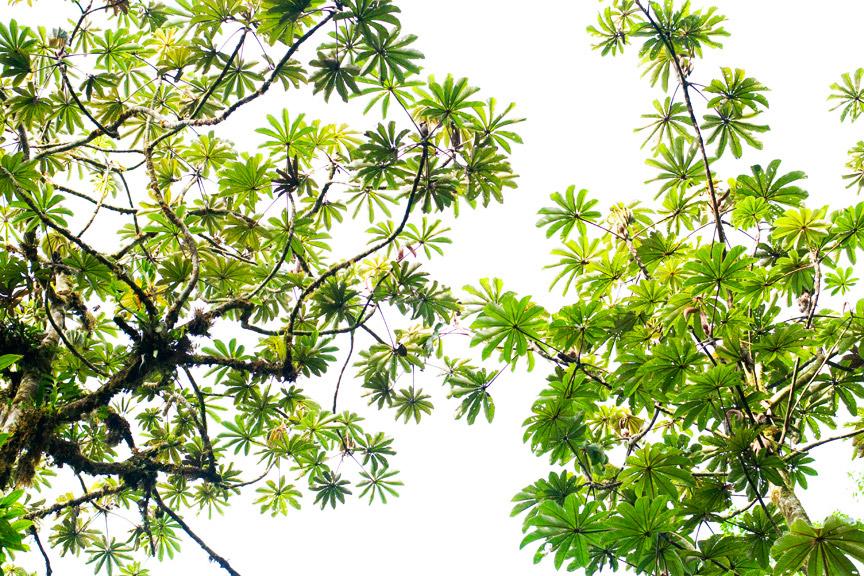 madelene-farin-costa-rica-080.jpg