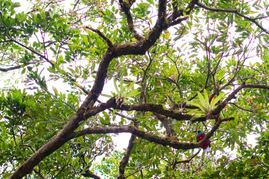 madelene-farin-costa-rica-096.jpg