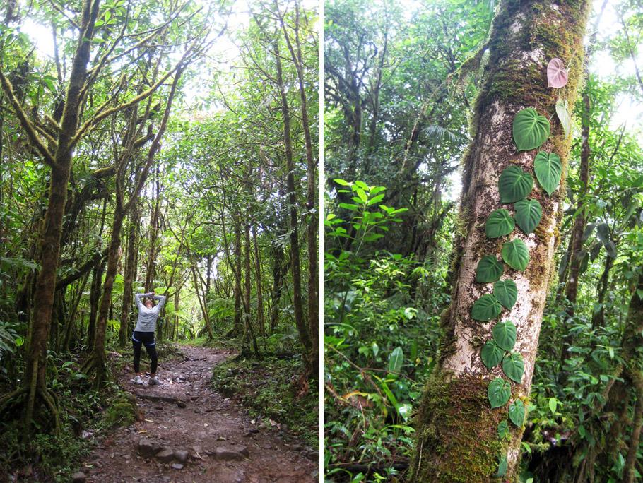 madelene-farin-costa-rica-132.jpg