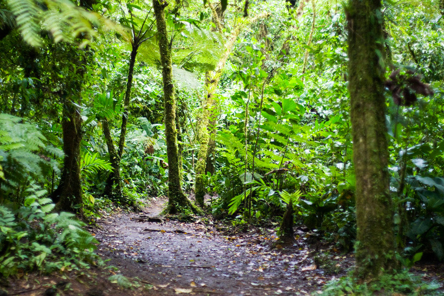 madelene-farin-costa-rica-148.jpg